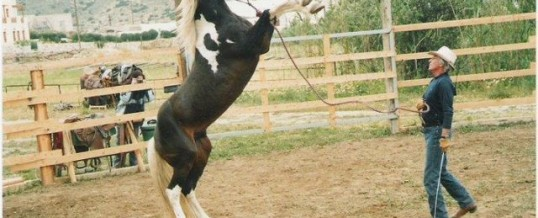 Horse Whispering for Life Enrichment